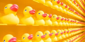 Yellow ducks lined up on shelves